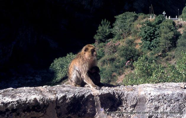 [071-1978-31] Gorges de Kherrata - Magot