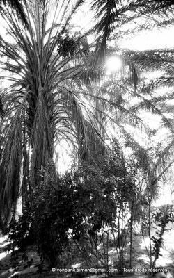 [NB023-1978-23] El Oued