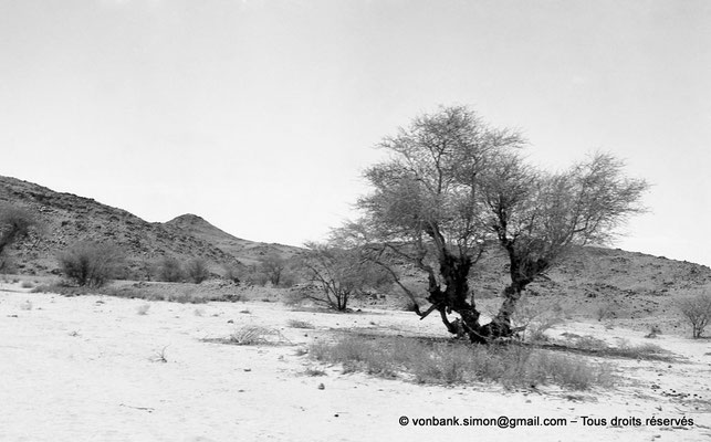 [NB102-1980-07] DZ - Tamanrasset - Hoggar