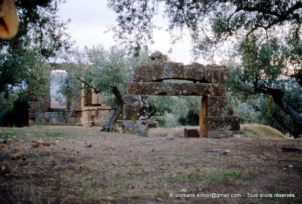 [006-1983-21] Sidi Ali-Bel-Kassem (Thuburnica) : Ruines dans l'olivaie