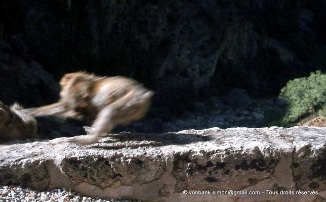 [071-1978-30] Gorges de Kherrata - Magot