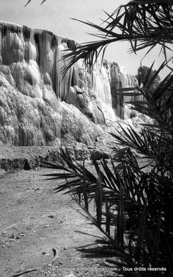 [NB017-1981-15] Hammam Meskoutine (Aquae Thibilitanae) :  Cascade pétrifiée