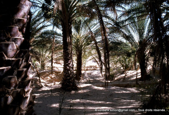 [044-1978-19] El Oued