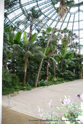 [NU900c-2012-0242] B - Bruxelles - Laeken : Serres royales - Jardin d'hiver