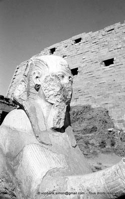 [NB077-1973-58] Karnak - Grande cour : A proximité du kiosque de Taharqa, sphinx à tête humaine (Tête de Toutankhamon ?) - En arrière-plan, amoncellement de briques crues au pied du môle Sud du premier pylône
