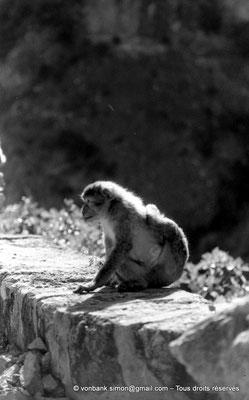 [NB055-1978-23] Gorges de Kherrata - Magot