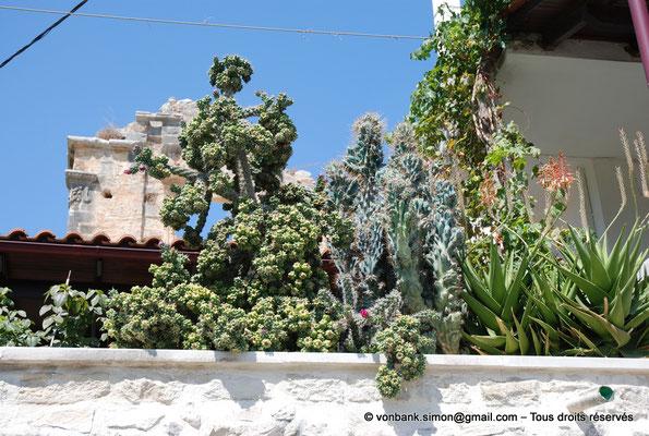 [NU900x-2013-0208] Crète - Argyroupoli : Pierres et plantes