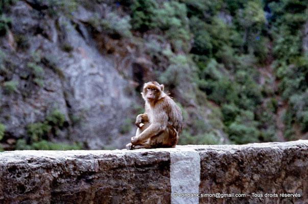 [071-1978-27] Gorges de Kherrata - Magots