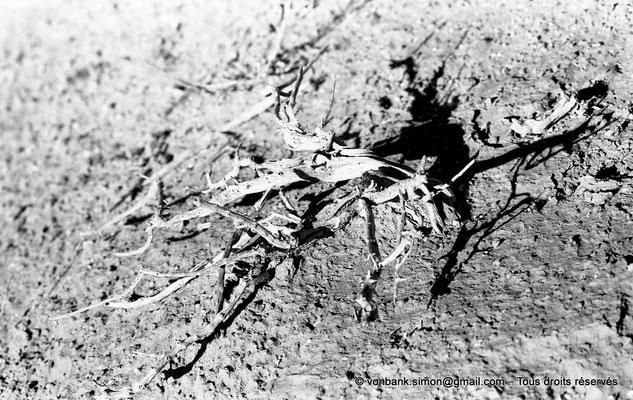 [NB052-1978-44] Massif de l'Aurès