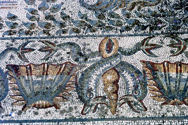 [072-1978-10] Annaba (Hippo Regius) : Mosaïque - Détail de la frise de coquilles et de dauphins aux queues enlacées autour d'un coquillage (Turritelle)