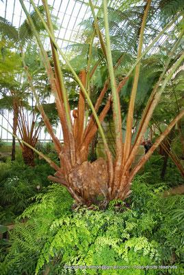 [NU900c-2012-0227] B - Bruxelles - Laeken : Serres royales - Jardin d'hiver