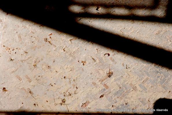 [NU003-2017-477] Caumont sur Durance (Clos-de-Serre) : Le fond du bassin est recouvert de plus de 50000 petites briquettes d'argile de couleurs différentes posées en opus spicatum