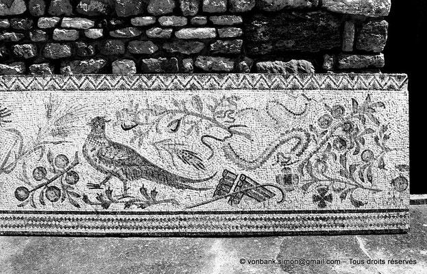 [NB011-1981-09] Carthage (Carthago) : Antiquarium - Mosaïque