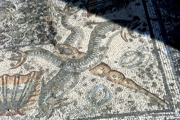 [072-1978-09] Annaba (Hippo Regius) : Mosaïque - Détail d'un écoinçon de la frise de coquilles et de dauphins aux queues enlacées autour d'un coquillage (Turritelle)