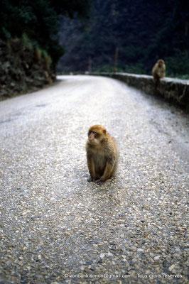 [012-1984-03] Gorges de Kherrata - Magots