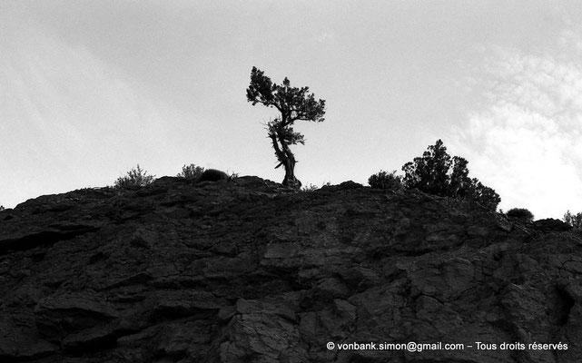 [NB053-1978-35] Massif de l'Aurès