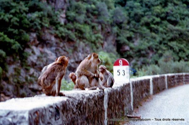 [071-1978-28] Gorges de Kherrata - Magots