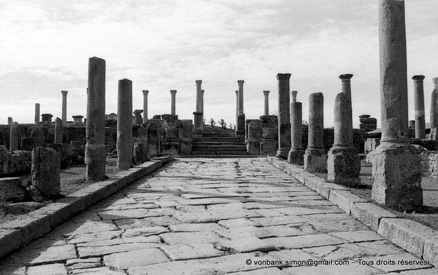 [NB024-1978-05] Timgad (Thamugadi) : Le cardo débouchant sur les marches d'accès au forum