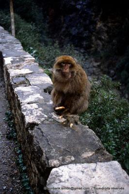 [012-1984-04] Gorges de Kherrata - Magot