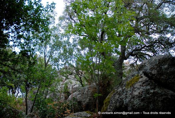 [NU904-2015-132] Nuraghe Majori (Sardaigne) : Extérieurs