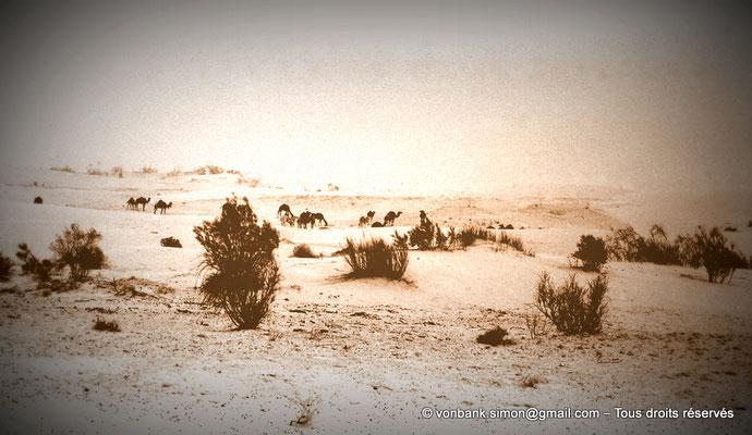 [NB050-1978-53a] Touggourt : Caravane dans le désert