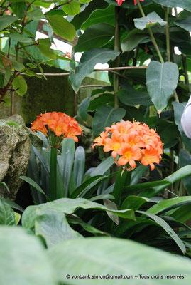 [NU900c-2012-0060] B - Bruxelles - Laeken : Serres royales - Jardin d'hiver