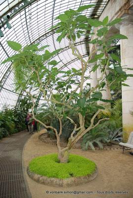 [NU900c-2012-0237] B - Bruxelles - Laeken : Serres royales - Jardin d'hiver