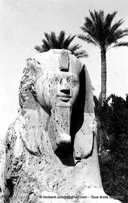 [NB085-1981-01] Memphis : Sphinx monumental situé sur le site du complexe religieux de Ptah (détail)