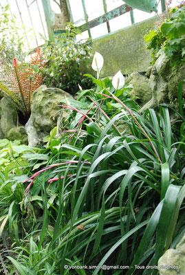 [NU900c-2012-0059] B - Bruxelles - Laeken : Serres royales - Jardin d'hiver