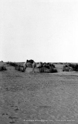 [NB014-1981-04] Djamaa - Dromadaire