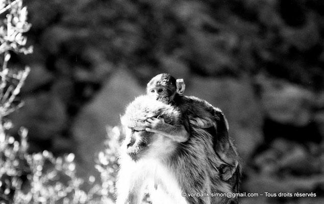[NB055-1978-28] Gorges de Kherrata - Magots