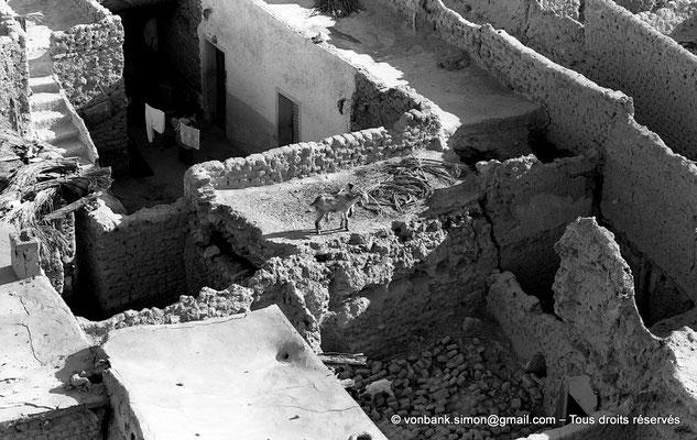 [NB060-1978-26] Temacine-Tamelhat - Village vu depuis le minaret de la mosquée de Si El Hadj Temacine