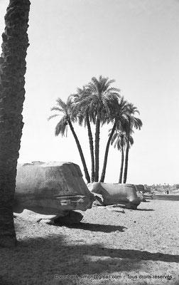 [NB070-1973-38] Karnak - Propylées du Sud : Dromos extérieur (vue partielle)