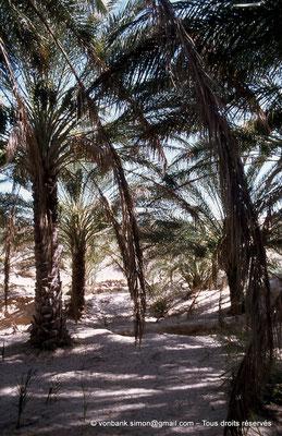 [044-1978-20] El Oued