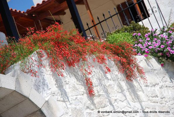 [NU900x-2013-0207] Crète - Argyroupoli : Pierres et plantes