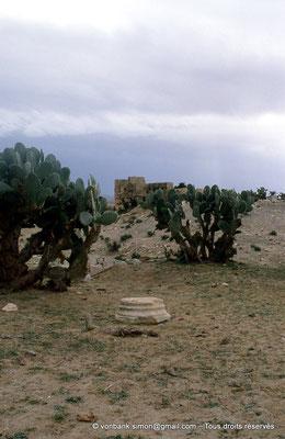 [007-1983-14] Kasserine (Cillium) : Ruines