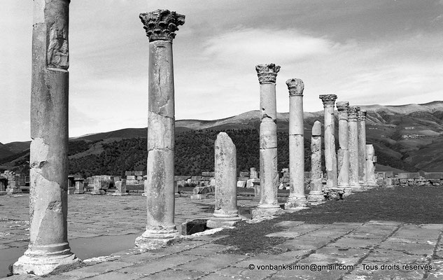 [NB031-1978-11] Djemila (Cuicul) : Colonnade Sud du forum