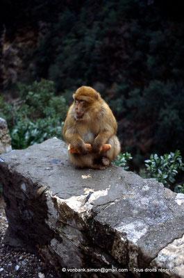 [014-1984-37] Gorges de Kherrata - Magot