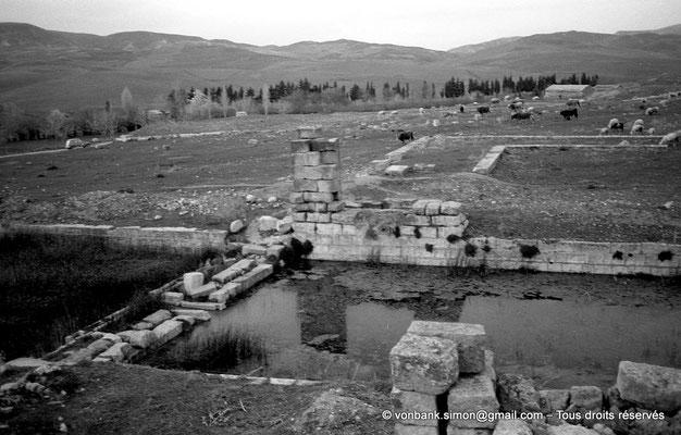 [NB034-1978-69] Khemissa (Thubursicu Numidarum) : Nymphée - L'étroit bassin d'eau douce