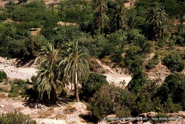 [041-1978-16] Massif de l'Aurès