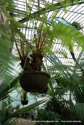 [NU900c-2012-0073] B - Bruxelles - Laeken : Serres royales - Jardin d'hiver
