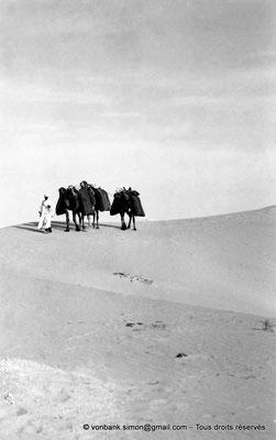 [NB088-1978-07] Touggourt : Caravane dans le désert
