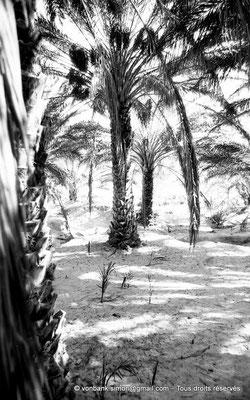 [NB023-1978-22] El Oued
