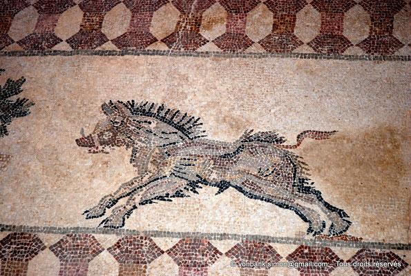 [NU900-2012-063] Paphos (Nea Paphos) : Villa de Dionysos - Scène de chasse - Sanglier [11]
