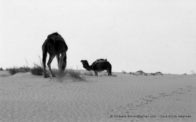 [NB014-1981-06] Djamaa - Dromadaires
