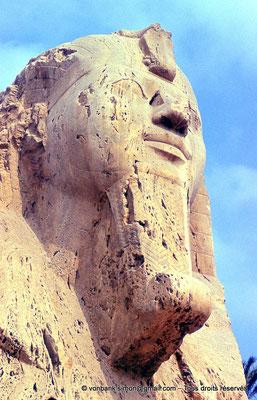 [089-1973-04] Memphis : Tête du sphinx monumental situé sur le site du complexe religieux de Ptah (détail)