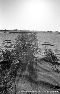 [NB091-1978-36] El Oued