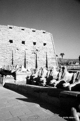 [088-1973-27] Karnak - Parvis du Temple : De chaque côtés de l'entrée principale, 20 sphinx criocéphale (lion à tête de bélier) nous conduisent vers le premier pylône - ils portent les cartouches de Ramsès II
