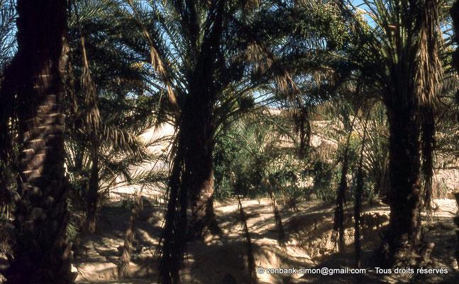 [044-1978-27] El Oued