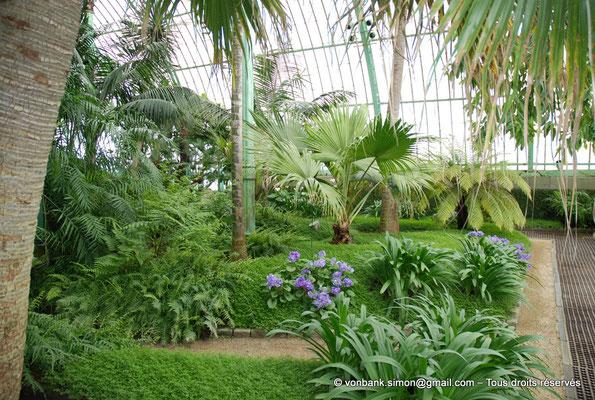 [NU900c-2012-0077] B - Bruxelles - Laeken : Serres royales - Jardin d'hiver